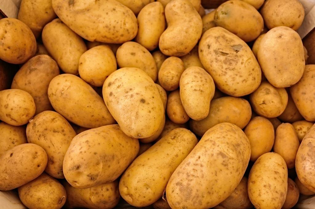 Photo de pommes de terre en robe des champs.